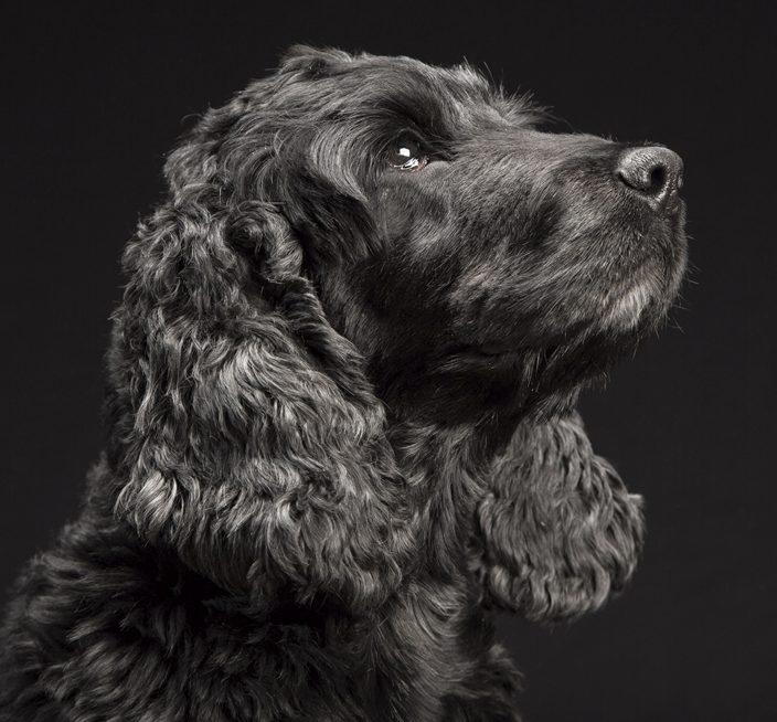 Hundeschule A-Z & SKN